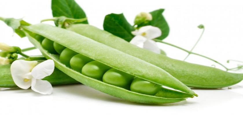proteina vegetal y deporte