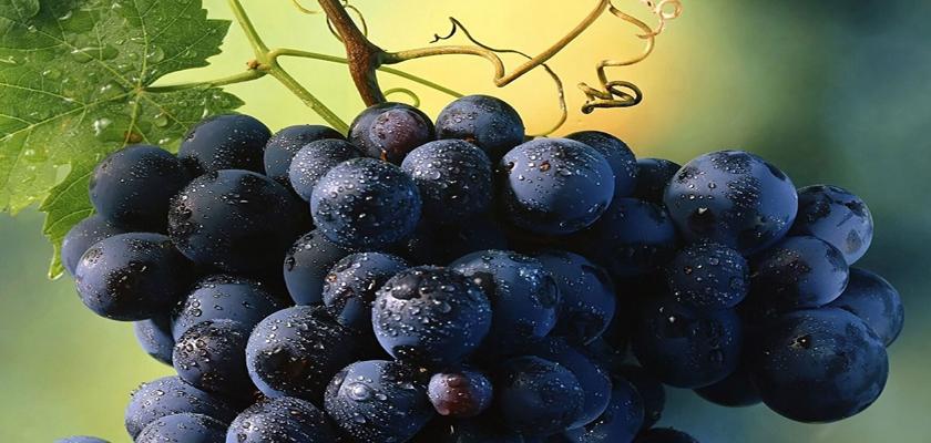 uva-propiedades-de-la-semilla