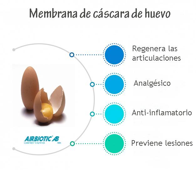 Membrana de cáscara de huevo, un nutriente para tus articulaciones