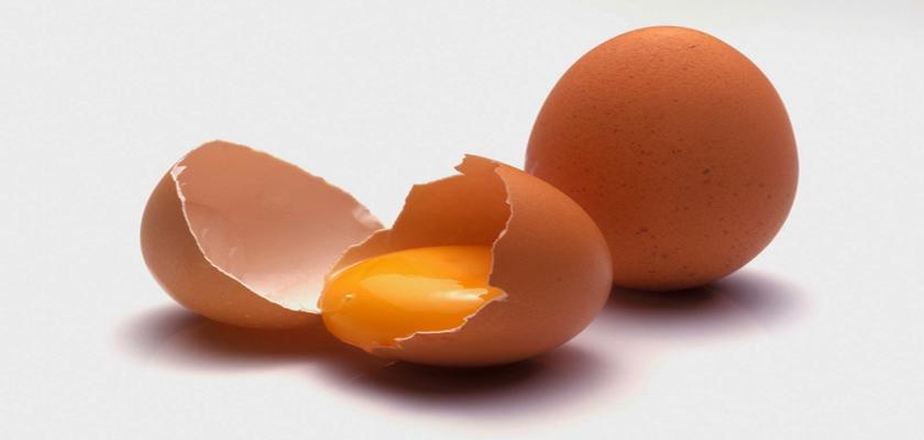 membrana cascara de huevo