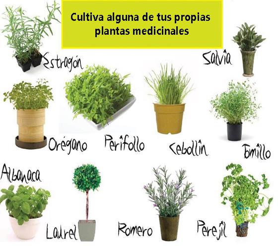 info Plantas medicinales